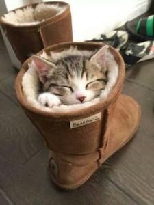Kittens in BEARPAW